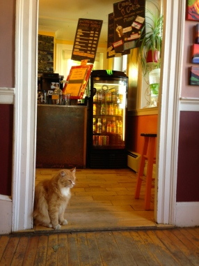 Orange Cat Cafe