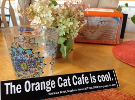 Orange Cat is Cool!