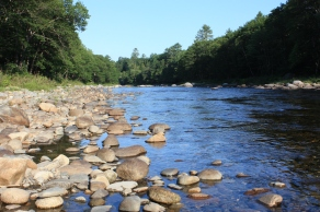 Carrabassett River